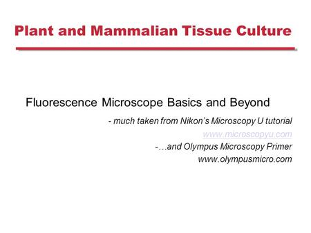Plant and Mammalian Tissue Culture Fluorescence Microscope Basics and Beyond - much taken from Nikon's Microscopy U tutorial www.microscopyu.com -…and.
