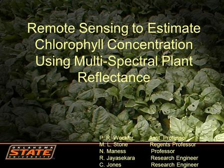 Remote Sensing to Estimate Chlorophyll Concentration Using Multi-Spectral Plant Reflectance P. R. Weckler Asst. Professor M. L. Stone Regents Professor.