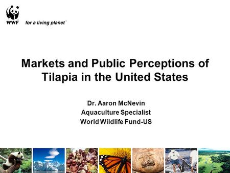 Markets and Public Perceptions of Tilapia in the United States Dr. Aaron McNevin Aquaculture Specialist World Wildlife Fund-US.
