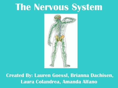 The Nervous System Created By: Lauren Goessl, Brianna Dachisen, Laura Colandrea, Amanda Alfano.