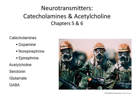 Neurotransmitters: Catecholamines & Acetylcholine Chapters 5 & 6 Catecholamines  Dopamine  Norepinephrine  Epinephrine Acetylcholine Serotonin Glutamate.