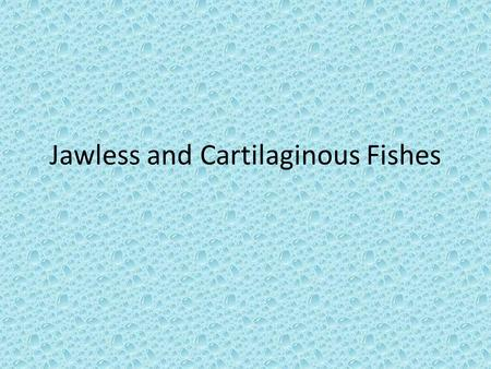 Jawless and Cartilaginous Fishes. Jawless Fish The only existing Jawless fish are hagfishes and lamprey Jawless fish's skin has neither plates nor scales.