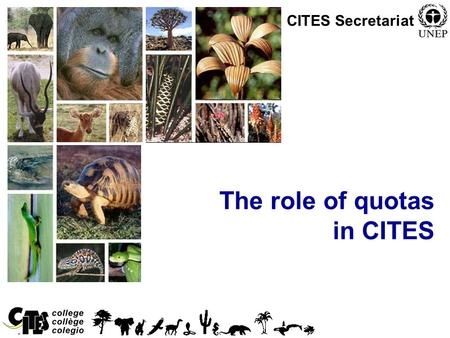 1 The role of quotas in CITES CITES Secretariat. 2 Session overview In this session we will: –Indicate the role of Scientific Authorities in establishing.