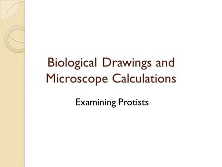 Biological Drawings and Microscope Calculations Examining Protists.