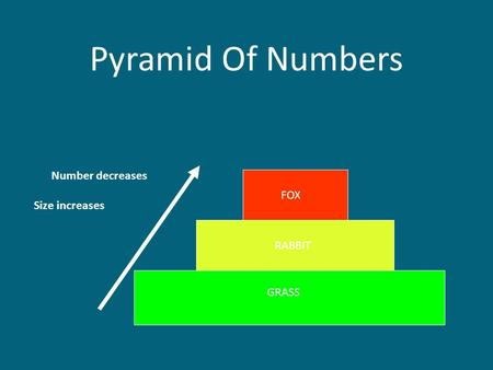 Pyramid Of Numbers GRASS RABBIT FOX Number decreases Size increases.