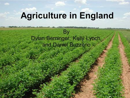 Agriculture in England By Dylan Berninger, Kelly Lynch, and Daniel Buzzerio.