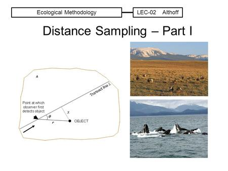 Distance Sampling – Part I Ecological MethodologyLEC-02 Althoff.