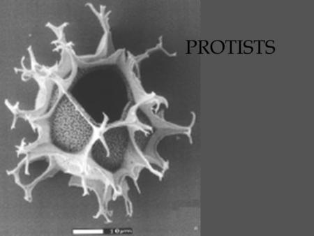 "PROTISTS. Protist classification eukaryotic mostly unicellular The protist kingdom is a ""dumping ground"" –includes organisms that have exceptions to the."