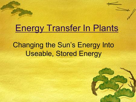 Energy Transfer In Plants Changing the Sun's Energy Into Useable, Stored Energy.