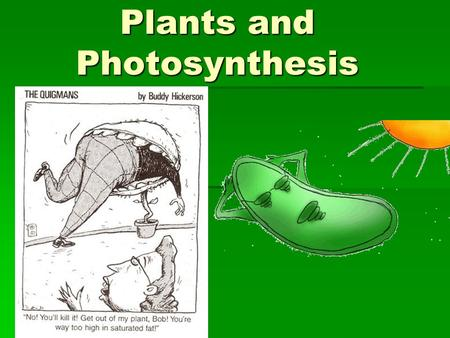 Plants and Photosynthesis. Plant cell Only in Plants  Chloroplast  Cell Wall  Vacuole (?)