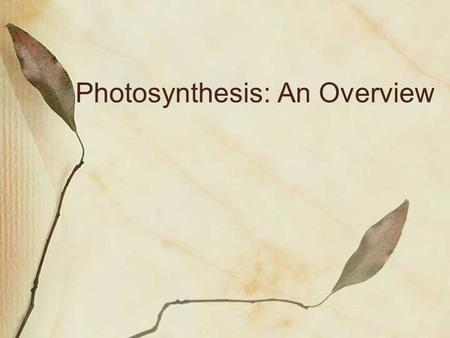 Photosynthesis: An Overview. Photosynthesis Plants use the energy of sunlight to convert water and carbon dioxide into high-energy carbohydrates Photosynthesis.