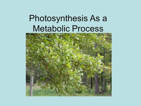 Photosynthesis As a Metabolic Process. What is it? Process where green plants (and certain photosynthetic bacteria) absorb sunlight and convert it to.