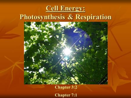 Cell Energy: Photosynthesis & Respiration Chapter 3:2 Chapter 7:1.