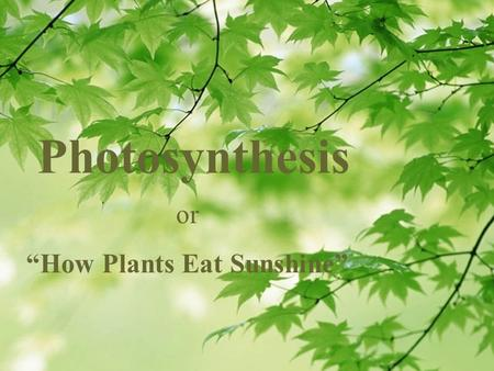 "Photosynthesis or ""How Plants Eat Sunshine"". Plants don't eat cheeseburgers. Where do plants get the food to create the energy they need to grow and reproduce?"