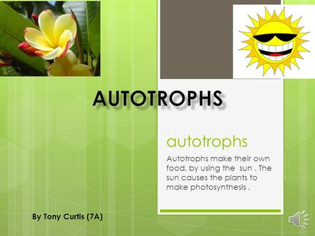 autotrophs Autotrophs make their own food, by using the sun. The sun causes the plants to make photosynthesis. By Tony Curtis (7A)