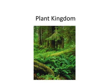 Plant Kingdom. Copyright Pearson Prentice Hall What Is a Plant? –Plants are multicellular eukaryotes that have cell walls made of cellulose. –Plants develop.