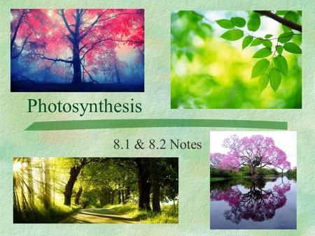 Photosynthesis 8.1 & 8.2 Notes.