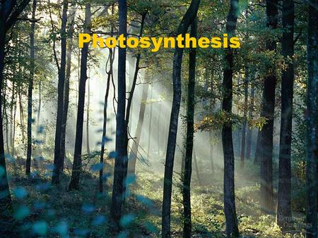 Photosynthesis. Journey Into a Leaf Plant Stomata.