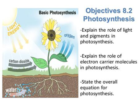 Lesson Overview Lesson Overview Photosynthesis: An Overview Objectives 8.2 Photosynthesis -Explain the role of light and pigments in photosynthesis. -Explain.