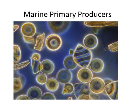 Marine Primary Producers
