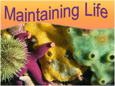 Learning Objectives Understand the basic functions that cells, tissues, and organs perform to keep a living system alive Understand how animals and plants.