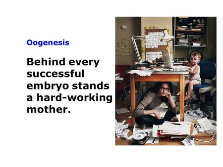 Oogenesis Behind every successful embryo stands a hard-working mother.