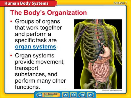 Lesson 1-1 Groups of organs that work together and perform a specific task are organ systems. organ systems Organ systems provide movement, transport.