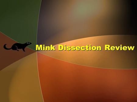 Mink Dissection Review. Menu Neck & Thoracic Cavity Abdominal Cavity Heart Blood Vessels Urinary System Reproductive Systems.