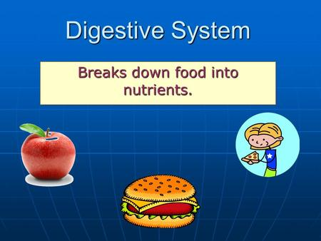 Breaks down food into nutrients.