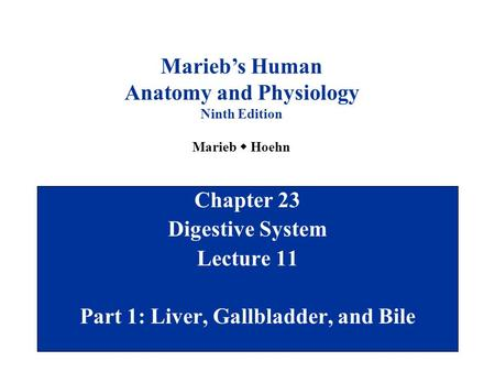 Chapter 23 Digestive System Lecture 11 Part 1: Liver, Gallbladder, and Bile Marieb's Human Anatomy and Physiology Ninth Edition Marieb  Hoehn.