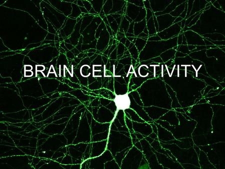 BRAIN CELL ACTIVITY. YOUR BRAIN… There are 2 kinds of brain cells…