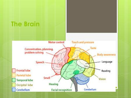 The Brain. 3 Memory Storage Systems Sensory Short Term Long Term.