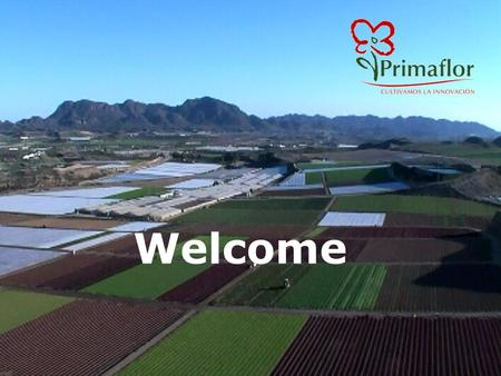 Welcome. Our Company 70´s Primaflor Flowers -Vegetables 80´s Consolidating as an Horticultural Company 90´s Expansion to European Markets 00´s Consolidating.