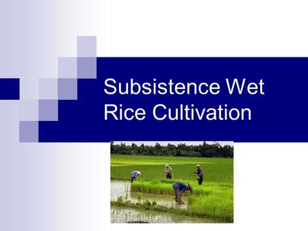Subsistence Wet Rice Cultivation. What is Wet Rice? It has been estimated that half the world's population subsists wholly or partially on rice. Wet rice.