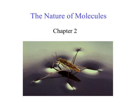The Nature of Molecules Chapter 2. 2 Why should we study atoms? Substances with mass and space – Matter All matter is composed of atoms. Understanding.