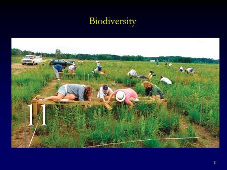 1 Biodiversity. 2 BIODIVERSITY Includes a variety of factors  Genetic Diversity  Species Diversity - Species Richness - Total number of species in a.