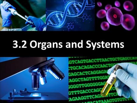 3.2 Organs and Systems. Learning Goals Learn about medical imaging technology Learn about the different human organ systems Learn about the digestive.