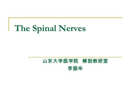 The Spinal Nerves 山东大学医学院 解剖教研室 李振华. 31 pairs spinal nerves: 8 cervical, 12 thoracic, 5 lumbar, 5 sacral, and 1 coccygeal nerve. Formation: each spinal.