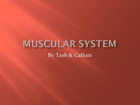 By Tash & Callum. What are the Functions of the Muscular System? Slide 3 What are the Major Organs That Make up the Muscular System? Slide 4-5 How do.