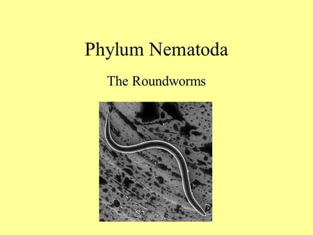 Phylum Nematoda The Roundworms.