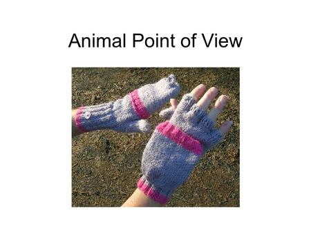 Animal Point of View. Take an Unusual Point of View Use the perspective of an animal Use several animal ideas on your roll Find out something about an.