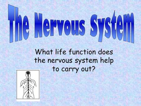 What life function does the nervous system help to carry out?