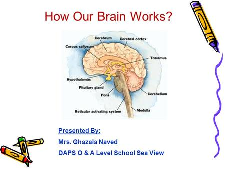 How Our Brain Works? Presented By: Mrs. Ghazala Naved DAPS O & A Level School Sea View.