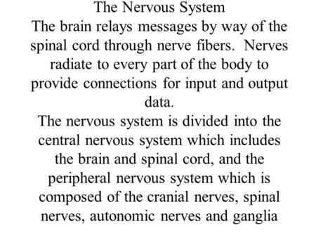 The Nervous System The brain relays messages by way of the spinal cord through nerve fibers. Nerves radiate to every part of the body to provide connections.