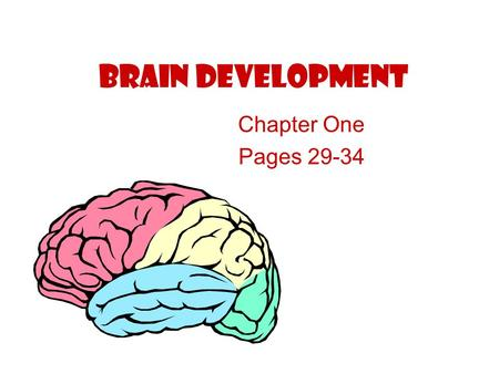 "Brain Development Chapter One Pages 29-34. The brain is the ""command center"" of the body! Body Systems Movements Thinking Memory Feelings The brain is."
