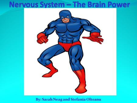 By: Sarah Neag and Stefania Olteanu. The Nervous System The Nervous System is responsible for all the processes that make human life possible. It's responsible.