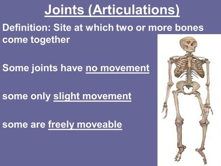Joints (Articulations) Definition: Site at which two or more bones come together Some joints have no movement some only slight movement some are freely.