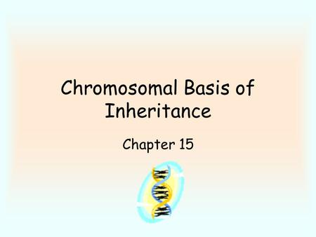 Chromosomal Basis of Inheritance Chapter 15. Genetic work done on fruit flies - takes little time to observe many generations. Thomas Morgan - fruit fly.