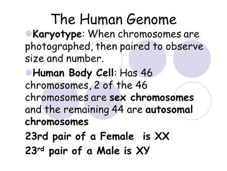 The Human Genome Karyotype: When chromosomes are photographed, then paired to observe size and number. Human Body Cell: Has 46 chromosomes, 2 of the 46.