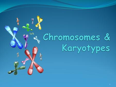 1. Chromosomes 2 Chromosome Number All cells in the human body (SOMATIC CELLS) have 46 or 23 pairs of chromosomes Called the DIPLOID or 2n number GAMETES.